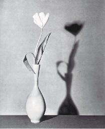 Flower (Tulip), 1983