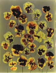 Untitled (Pansies), 1991