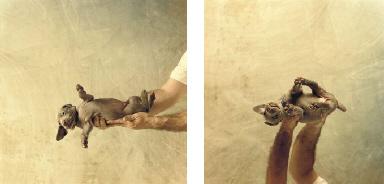 Untitled (Puppy), 1989