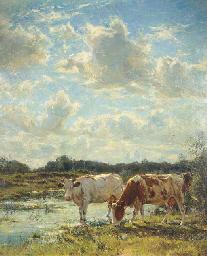 Bords de la Zan (Matin); cows