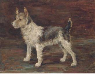Portrait of a terrier