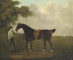 Un cavalier et son cheval