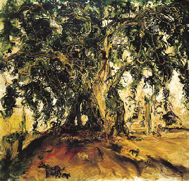 Pohon Beringin (Banyan tree)