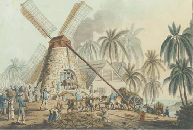 Sugar production in the Island