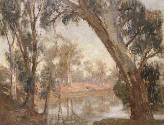 Murray River Gums