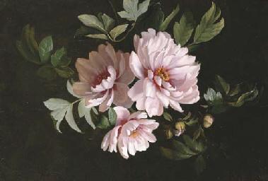 A Study of Mauve Flowers