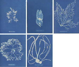 Photographs of British Algæ. Cyanotype Impressions., Robert Hunt's copy