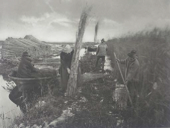 During the Reed - Harvest, pla