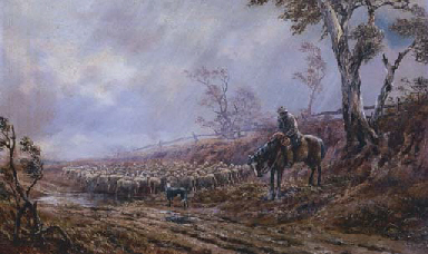 Droving Sheep