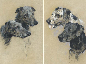 Two Scottish Deerhounds; and T