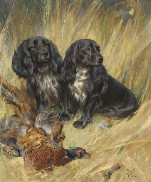 Spaniels with a cock pheasant