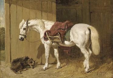 A grey pony with a dog by a st