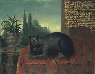 A cat on a draped table