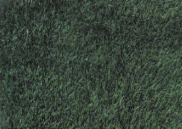 Rasen (Lawn)