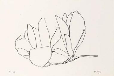 Magnolia (Axsom 56)