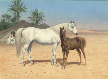 Arab horses in the desert