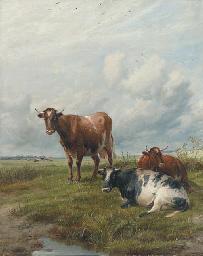 Cattle in an extensive landsca