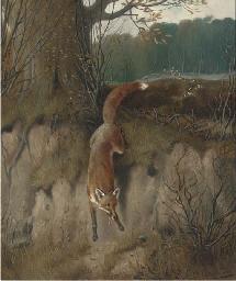 The hunted fox