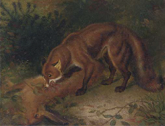 A fox eating a hare