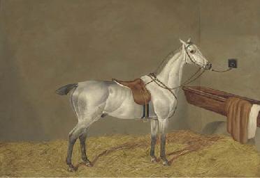 A grey racehorse in a loose bo