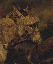 A donkey and foal