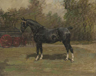 Melton, a black horse with whi