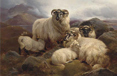 Sheep on the Welsh hills