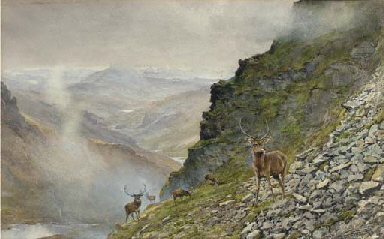Stags in a Highland landscape