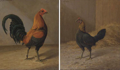 A prize winning red-brown cock