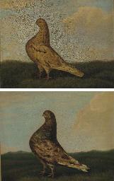 Prize pigeons