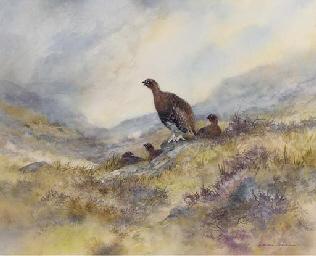 Grouse on a moor