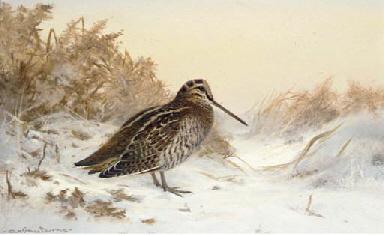 Woodcock, Winter