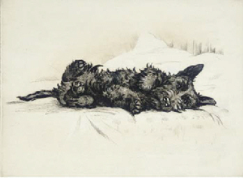 Morning, a Scottie dog lying o