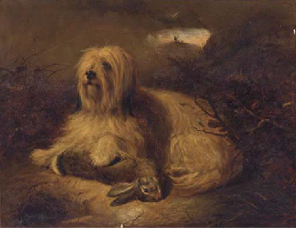 A Skye terrier with a hare