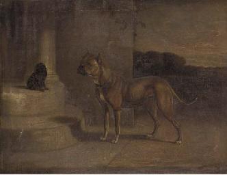 A Staffordshire bull terrier w