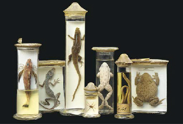 A collection of preserved spec