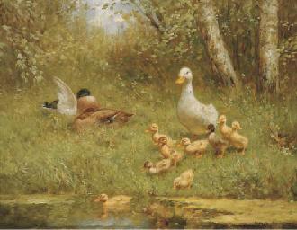Ducks by the waterside
