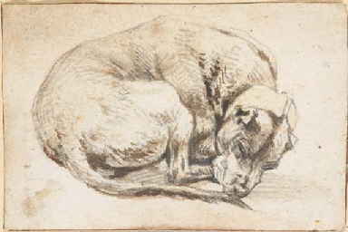A sleeping dog