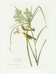 Prairie Warbler (Plate 14) Den