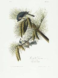 Crested Titmouse (Plate 39) Tu