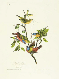 Painted Bunting (Plate 53) Pai