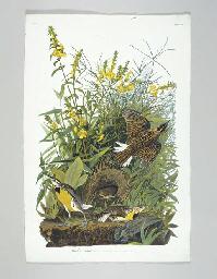Meadow Lark (Plate CXXXVI) Eas