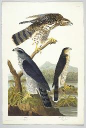 Goshawk. Stanley Hawk  (Plate