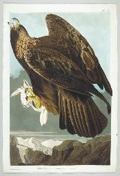 Golden Eagle (Plate CLXXXI) Aq