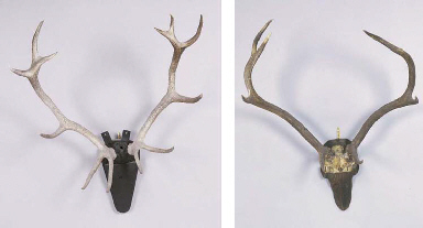 A SET OF ANTLERS