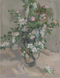 White and pink apple blossom;