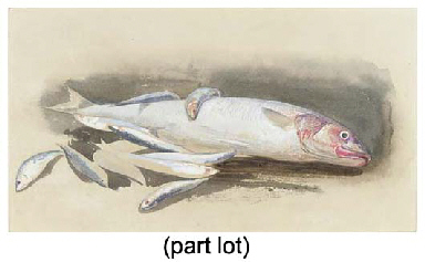 A study of fishes