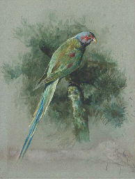 Study of a parrot