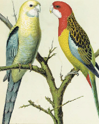 The illustrated book of Canari