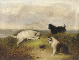Terriers ratting